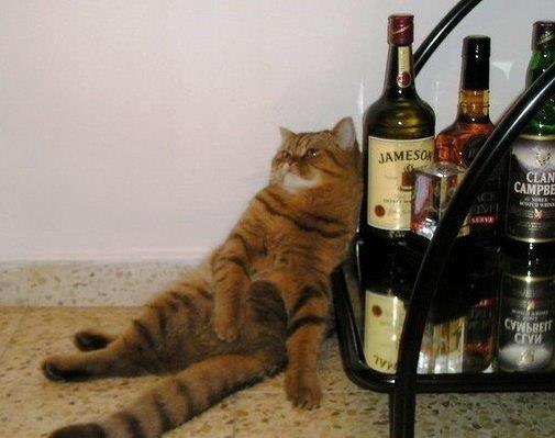 酔いどれニャンコ