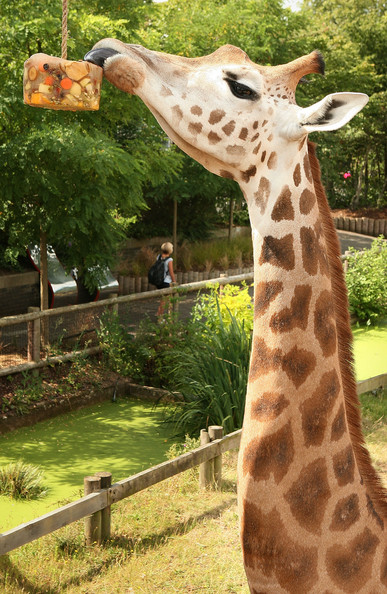 Lions+Show+London+Zoo+Late+Night+Event+JY5GRcBI2ynl.jpg