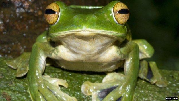 _65281021_frog_reuters.jpg