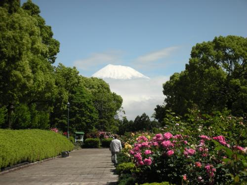 公園の富士4
