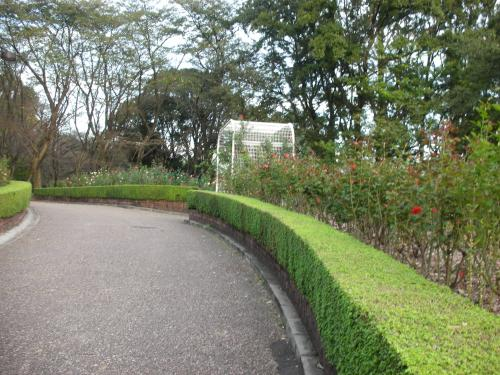 秋のバラ園2