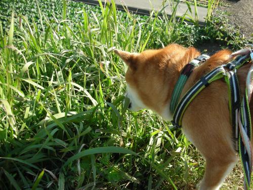 草にもぐる