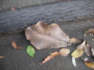 大きな落ち葉