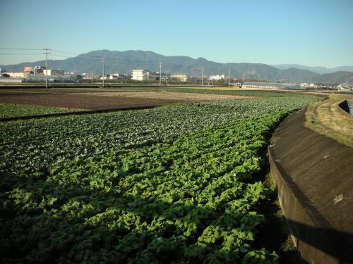 広い広い畑