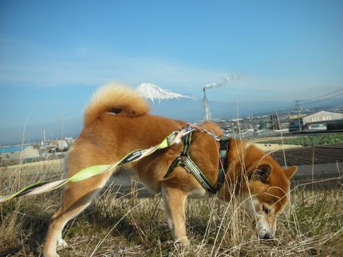富士山とクンクン犬 2