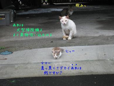 Img_5622_2