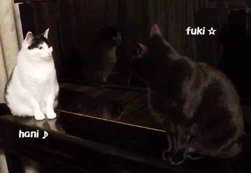 20120504fukihani_20120505214526.jpg
