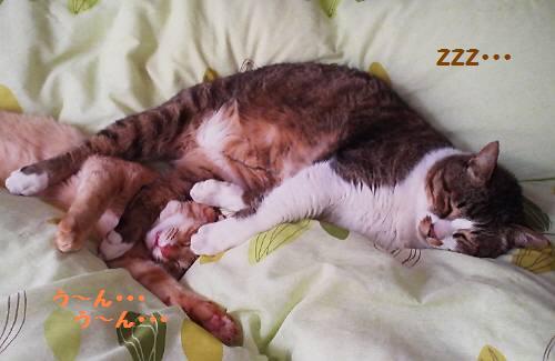 20120504natumaro_20120505202924.jpg