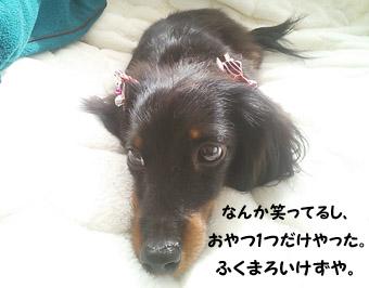 36_marofuku4_0316.jpg