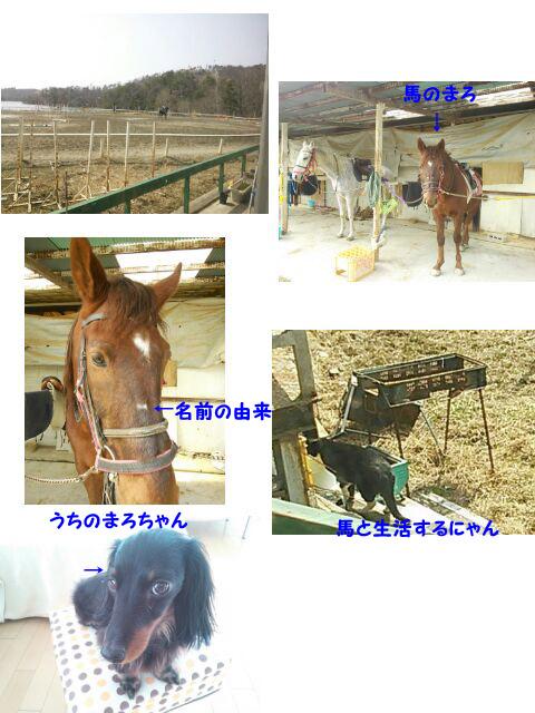 37_marofuku1_0318.jpg