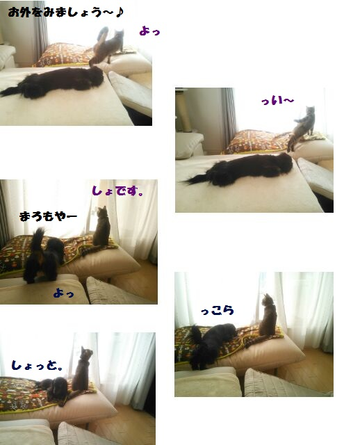 44_marofuku_130402.jpg
