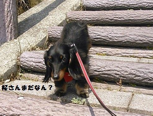 45_fukumaro1_130404.jpg