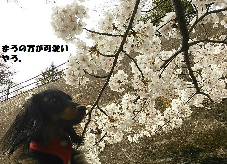45_fukumaro3_130404.jpg