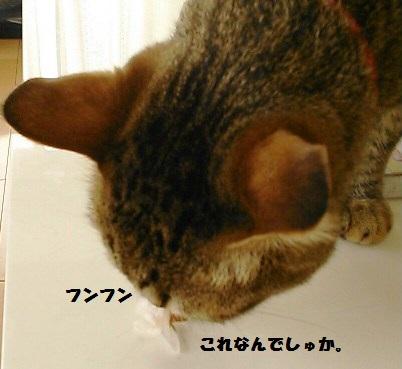 45_fukumaro5_130404.jpg