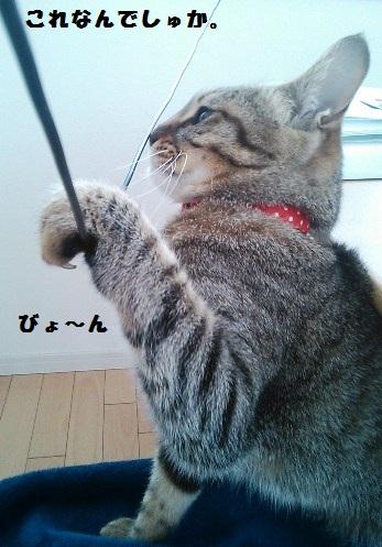 47_fukumaro3r_130408.jpg