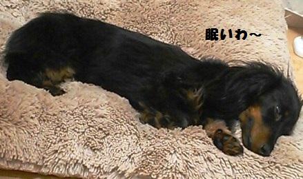 47_fukumaro4r_130408.jpg