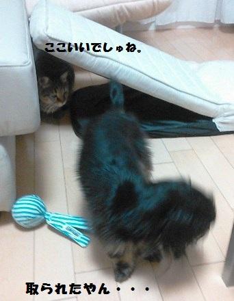 48_fukumaro2_130410.jpg