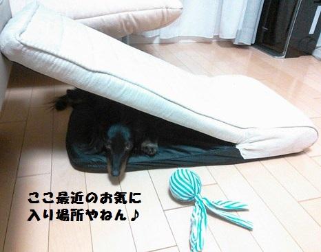48_fukumaro_130410.jpg