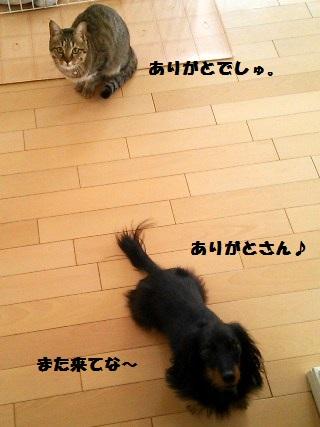 49_fukumaro3_130412.jpg