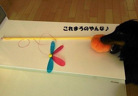 49_fukumaro4_130412.jpg