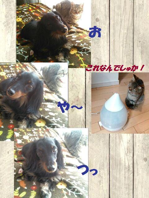 50_fukumaro_130415.jpg