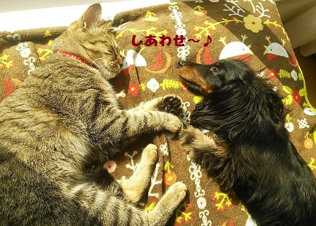 51_fukumaro_130417.jpg