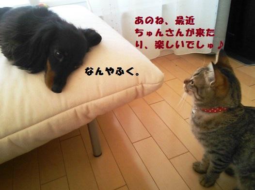 53_marofuku3_130424.jpg
