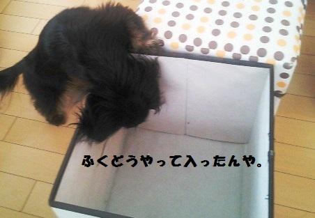 54_marofuku3_130427.jpg