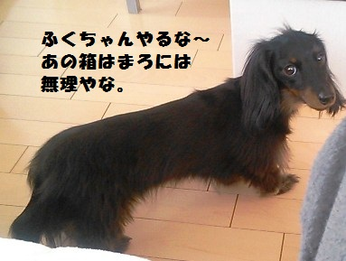 54_marofuku4_130427.jpg