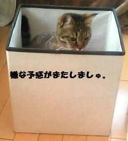 54_marofuku_130427.jpg