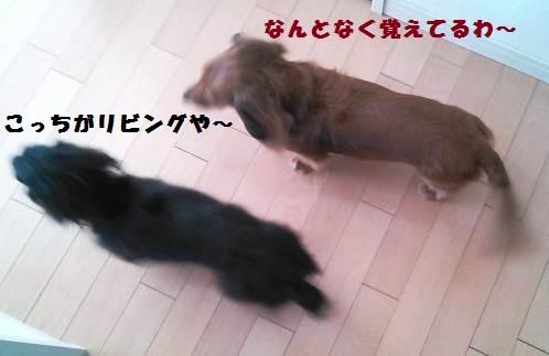 57_marofuku_130509.jpg