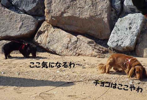 59_marofuku1_1305012.jpg