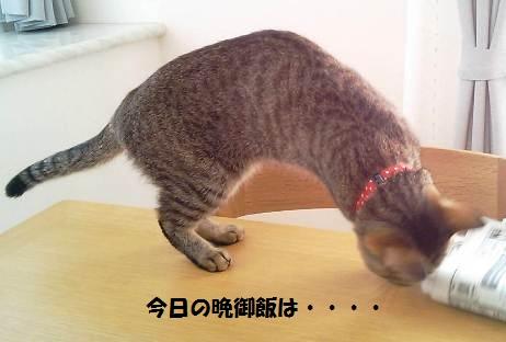 63_marofuku_1305022.jpg