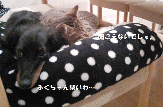 64_marofuku2_1305025.jpg