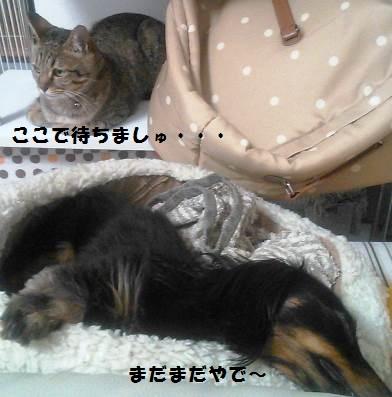 68_marofuku2__130604.jpg