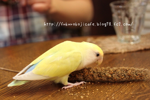 食べてるきいちゃん
