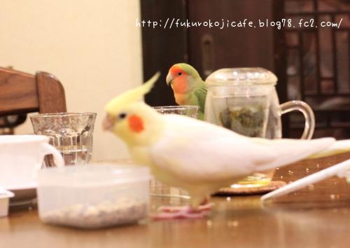 るびぃちゃん&ふうた2