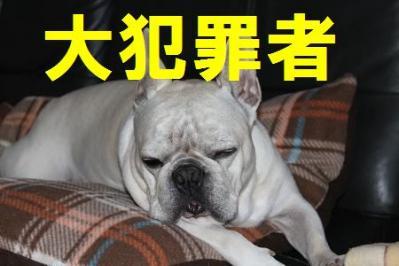 日本語ssx