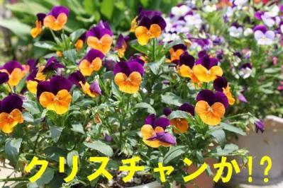 庭花hls