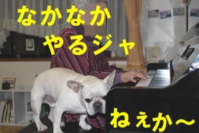 ピアノhbg