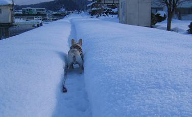 冬の道hyw
