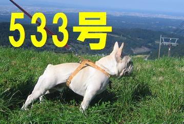 533号qwe