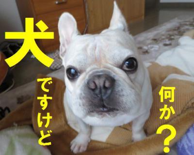 犬ですがiiiiiiiiiinu