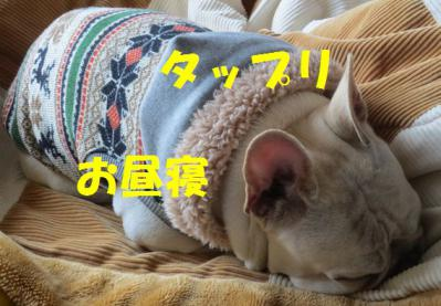 お昼寝jio