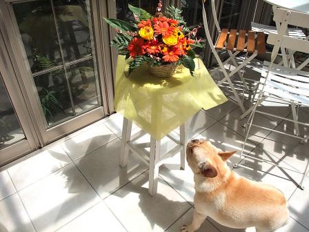 8-5花とうた