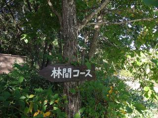 10-18林間