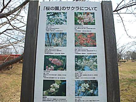 11.18桜の園看板2