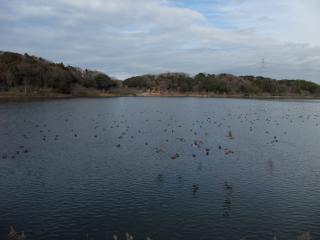 12.31渡り鳥