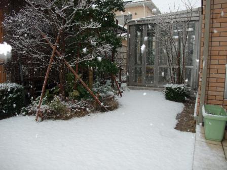1.16雪のお庭