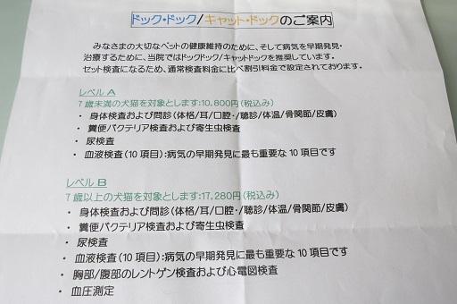 11-3ドックドックレベルB②